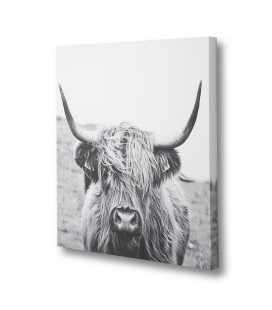 Scottish Highland Cattle | Wall Art for Sale | Canvas Art | Decor | Cielo -