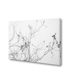 Beautiful Desolation Canvas Art