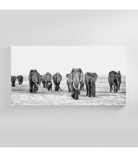 CAN-001 - Elephant Walk Canvas Art -