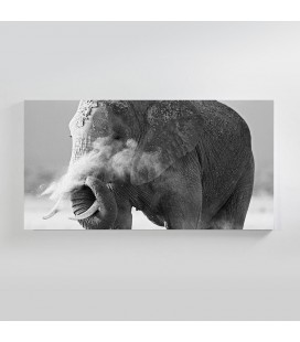 CAN-007 - Elephant in the Dust Canvas Art -